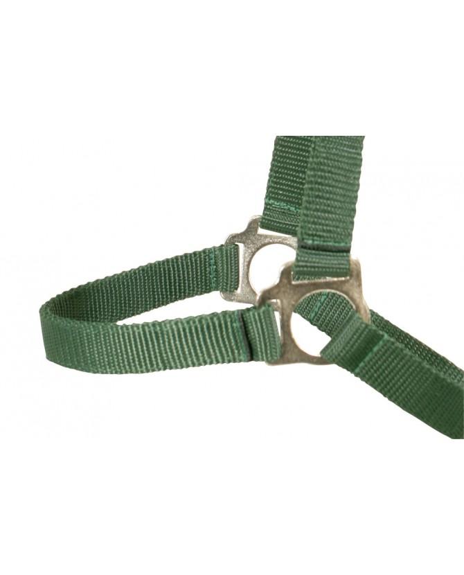 005543-licol-sans-boucle-vert