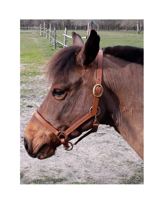 Licol cuir surpiqure - poney - la halle aux minis