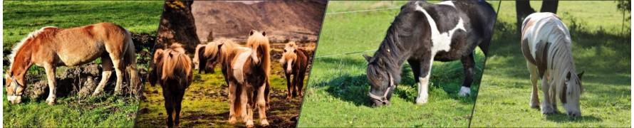 Matériel poney - La halle aux minis