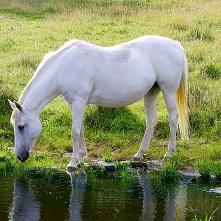 acceuil - poney dans son pré - la halle aux minis